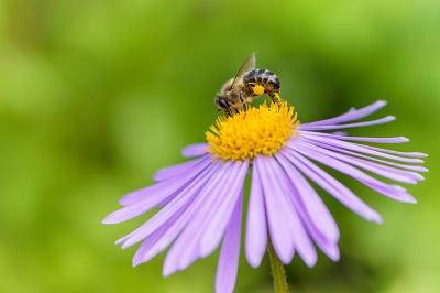 A Plea to Homeowners: Honeybees Need Homes, Too!